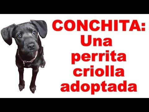 Conchita: Una perrita criolla adoptada | Tu Mascota TV