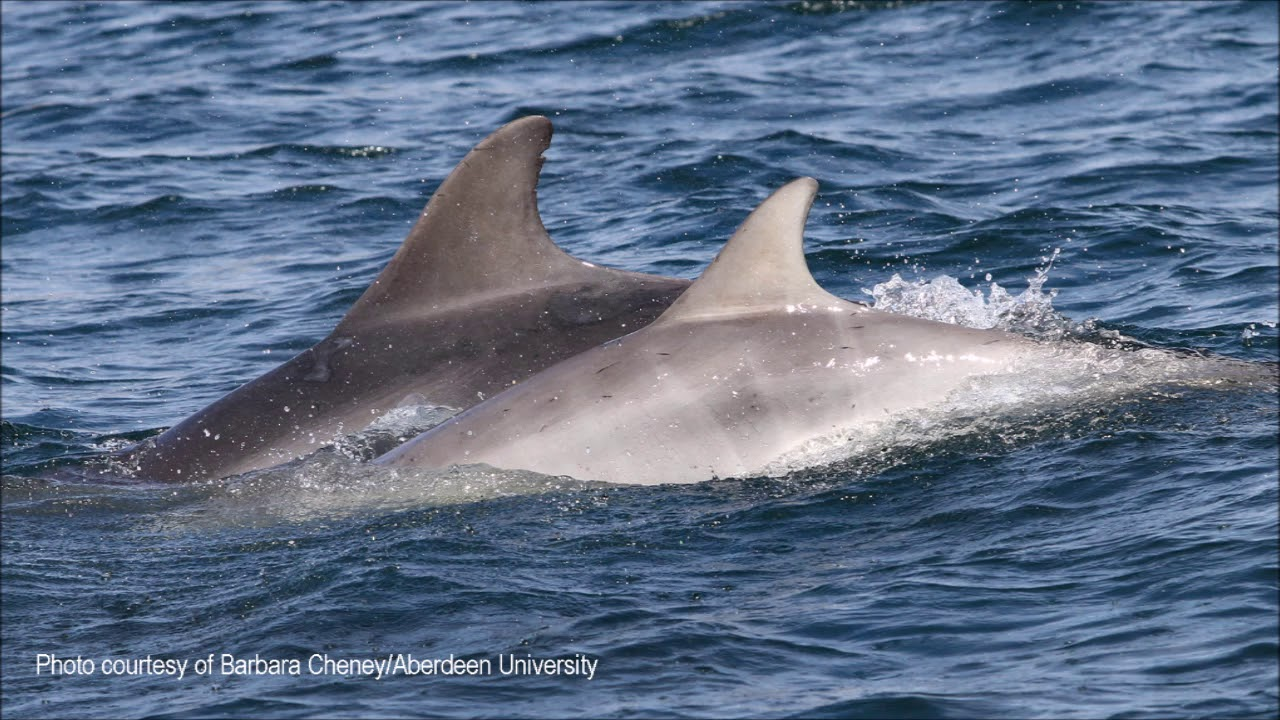 Adopt a Dolphin Update - May 2018