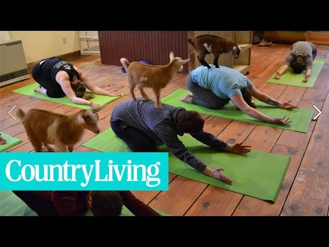 This Farm's 'Goat Yoga' Classes Are Absolutely Adorable | Country Living