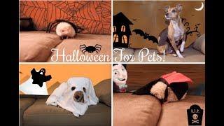 Making Halloween Costumes For My Pets | Brandi Noelle