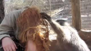 Monkey Grooming Me