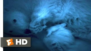 Arctic Tale (10/10) Movie CLIP - Newborn Polar Bear (2007) HD