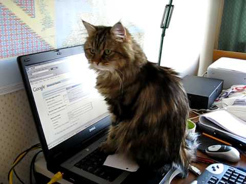 Cat Wosh Games