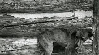 Собака которая ждала умерших хозяев на дороге 8 лет