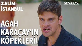 Gambar cover Civan Hesap Soruyor! Kardeşim Nerede Karaçay Köpekleri! | Zalim İstanbul 13. Bölüm