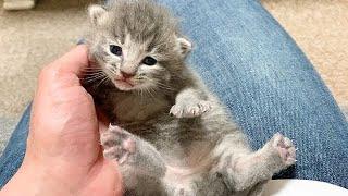 赤ちゃん猫を抱っこしたら怒られました・・・