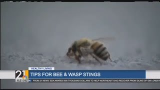 Protecting kids from bee and wasp stings