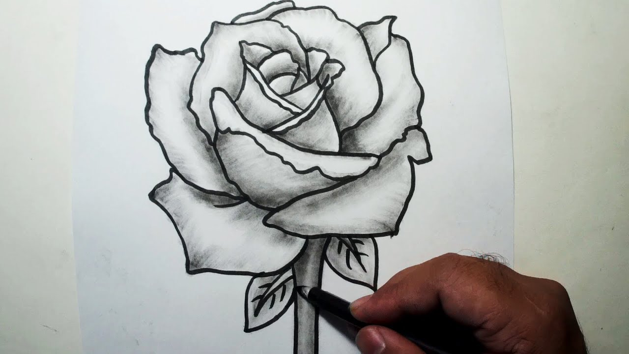 It is an image of Monster Charcoal Rose Drawing