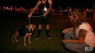 Saving a Pit Bull, Abused and Abandoned | Pit Bulls and Parolees