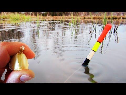 ЛОВЛЯ КАРАСЯ НА ЧЕСНОК! Утащило удочку! Рыбалка на пруду СИБИРИЯ