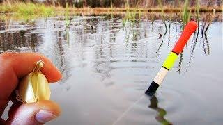 ЛОВЛЯ КАРАСЯ НА ЧЕСНОК В МАЕ! Утащило удочку! Рыбалка на пруду