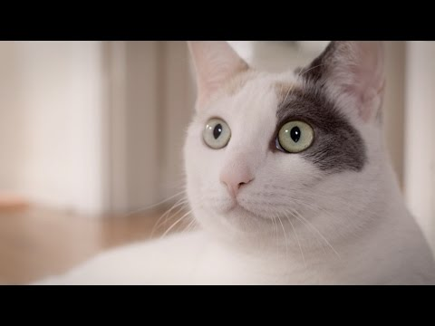 Aimee Mann- Goose Snow Cone (Official Video)