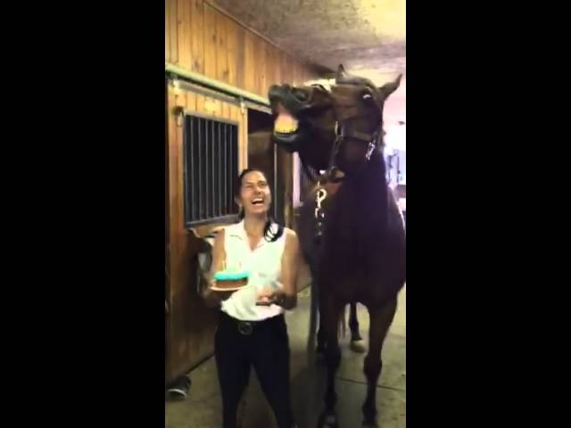 Grandson of Secretariat, JD blows out his birthday candles!
