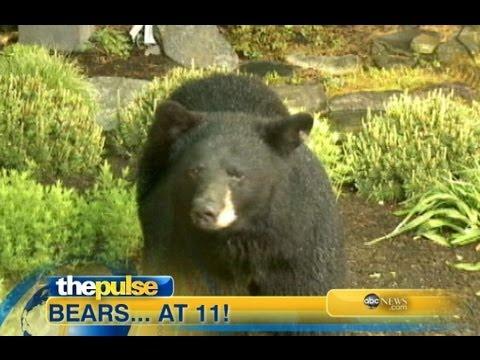 Bears Invade WNEP-TV in Pennsylvania