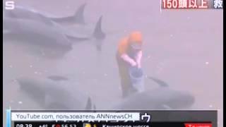 В Японии на берег выбросились 130 дельфинов