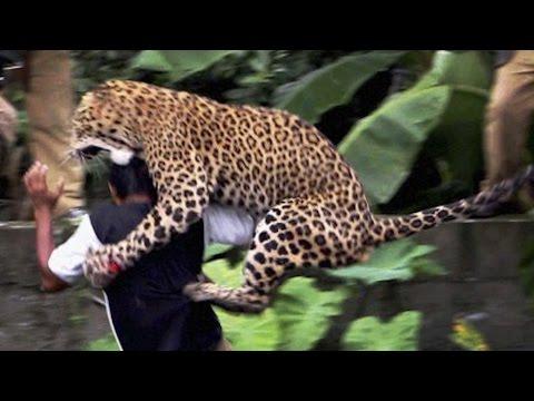 16 Worst Animal Attacks