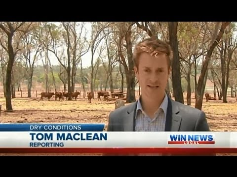 Qld Drought Coverage: CQ Cattle Farmers Hoping For Rain - WIN News Rockhampton (Jan 6, 2014)