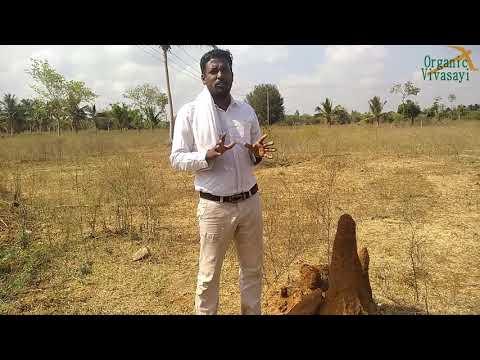 மண் குளியல் பற்றி வெளியே தெரியாத ரகசியங்கள் | கரையான் புற்று மண் குளியல் | mud Therapy | PUTUR MAN