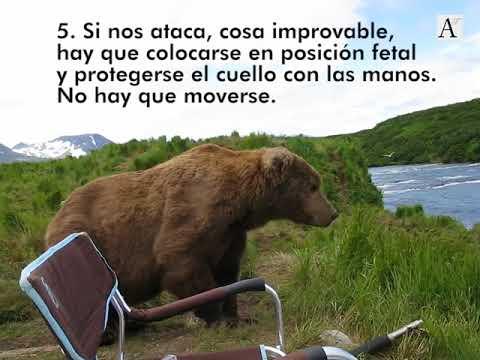 ¿Qué tenemos que hacer si un oso decide sentarse a nuestro lado?