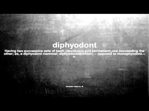 What does diphyodont mean