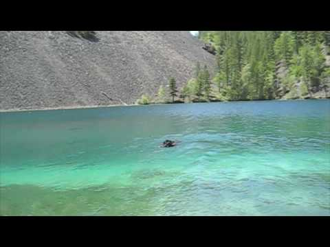 Newfoundland Dog Swimming in Spring Lake, British Columbia Canada