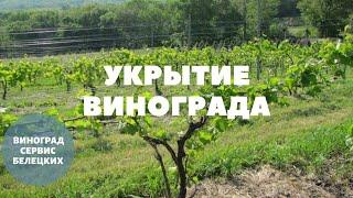 Виноградные технологии!Путь к успеху!Укрытие кустов на зиму  землёй и ВАЖНЫЕ весенние работы!