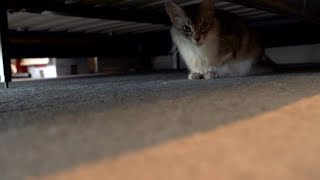 5 Ways to Get the Cat Out from under the Bed