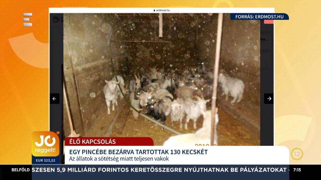 kecske helminták