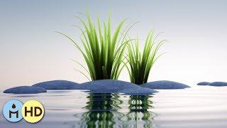 Musique Relaxante pour Dormir: Détente Zen Anti Stress avec Sons Nature Douce (Rain Sounds) ☂803