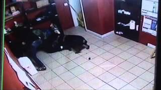 Rottweiler attacks gunman at Moreno Valley, CA pawnshop