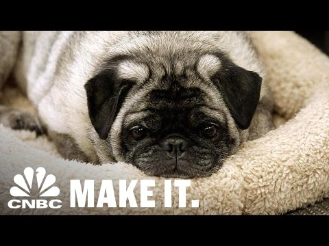 Relocating Pets Grew Into A $50 Million Business | Strange Success | CNBC Make It.