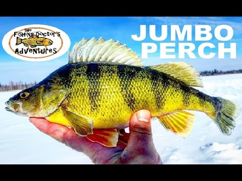 How To Ice Fishing Alberta Off Road Perch