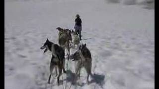 Glacier Dog Sledding in Juneau, Alaska