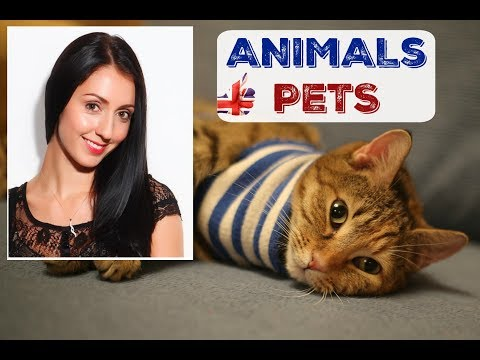PETS in Britain:  Learn about Animals loved in ENGLAND / LIVE ENGLISH LESSON - Diphthong Vowels