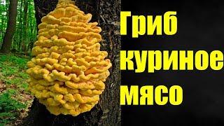 видео Ежевик желтый: рецепт приготовления