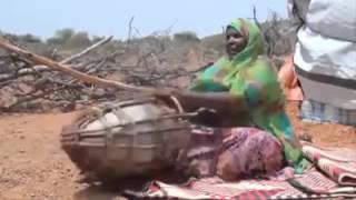 Lol Somali Lol