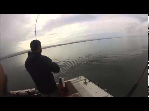 Sf Bay Shark And Sturgeon Fishing