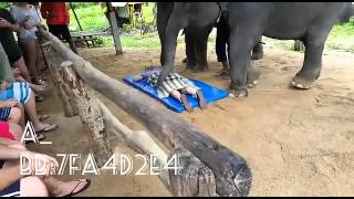 Elephant giving message to people