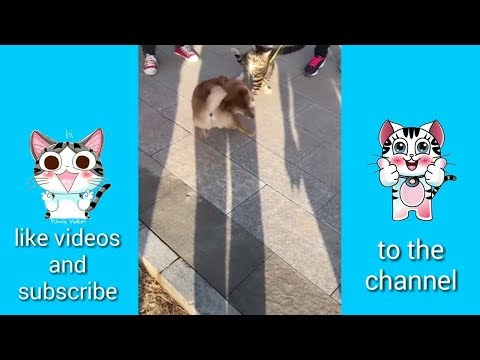 Funny and pet funny videos, animals funny videos