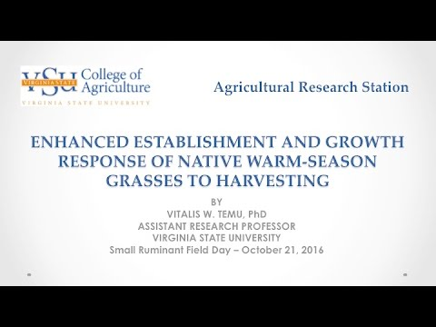Native Warm-Season Grasses for Small Ruminant Grazing System