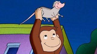 Jorge el Curioso en Español 🐵Compilación de 1 Hora 🐵 Capitulos completos del Mono Jorge