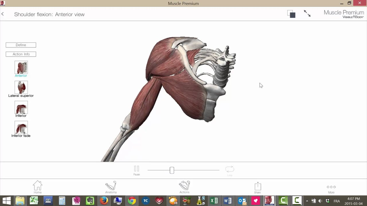 Shoulder joint complex motion - YouTube