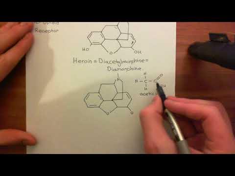 Opioid Receptors Part 1