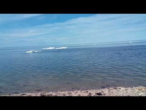 2016 Swimming in the Hudson Bay