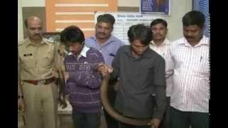 Mandul Snake  MPC News   Pune   Pimpri-Chinchwad