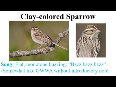 CEAP Birds - Sparrows