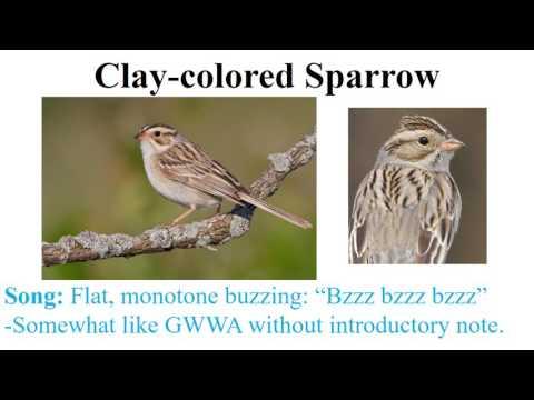 CEAP birds - sparrows