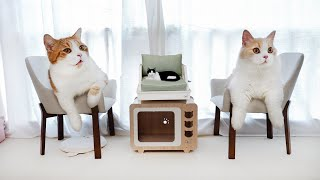 花花与三猫-花7000元猫房大改造-让人类嫉妒的豪华家具-猫咪感动哭了