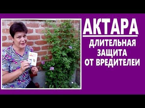 Системные инсектициды АКТАРА - длительная защита от тли, клещей,гусениц... Знакомство с препаратом