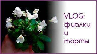VLOG: фиалки и торты(Другие мои видео по уходу за фиалками и остальными моими комнатными растениями смотрите на канале https://www.yout..., 2016-02-23T16:42:51.000Z)